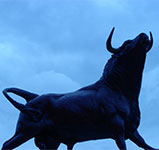 image of bull