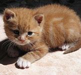 image of kitten